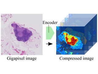 Neural Image Compression for Gigapixel Histopathology Image Analysis